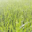 Perfect green grass texture — Stock Photo #12806210