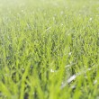 Stock Photo: Perfect green grass texture