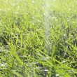 Perfect green grass texture — Stock Photo #12806223