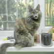 Cat sitting on the windowsill — Foto de Stock