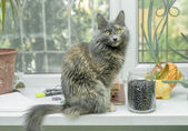 Gato sentado no parapeito do janela — Foto Stock