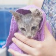 Wet cat in a towel after bath — Stock Photo