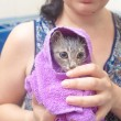 Kitten - wet cat in a towel after bath — Stockfoto #29434391