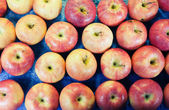 Many apples — Stock Photo
