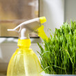 Grass and sprayer indoors — Stock Photo