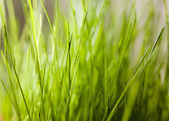 Grass indoor — Stock Photo