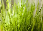 Grass indoor — Stock Photo
