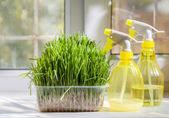 Grass and sprayer indoors — Stock Photo