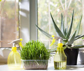 Two sprayers and different home plants in the pot on window-sill — Stock Photo