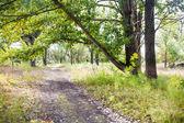 Calzada del bosque — Foto de Stock