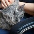 Cat on lap — Stock fotografie #37685221