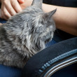 Cat on lap — Stock Photo #37685221