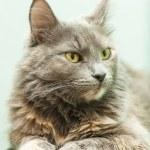 Cat indoors — Stock Photo #37801281