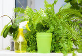 Plants and sprayer on windowsill — Stock Photo