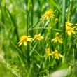 Yellow flowers in grass — Stock Photo #39378315