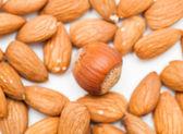 Background of hazelnuts — Stock Photo