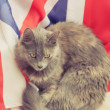 Gray cat lying on a Great Britain flag — Stock Photo