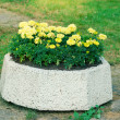 Flowerbed with yellow flowers — Stock Photo #48099013