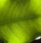 Macro pattern of a fresh green leave — 图库照片
