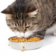 Striped cat eats a dry feed — Stock Photo