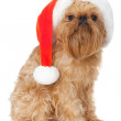 Dog Santa — Stock Photo