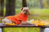Dog and autumn. — Stock Photo