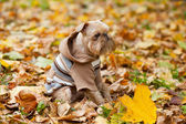 Pes v parku na podzim. — Stock fotografie