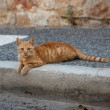 Street cat — Stock Photo #13976110