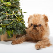 Christmas and dog — Stock Photo