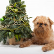 Christmas and dog — Stock Photo #14659413