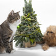 Dog and cat lies near the Christmas tree — Stock Photo
