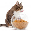 Gray cat and dry food - Stock Photo