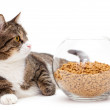 Gray cat and dry food — Stock Photo