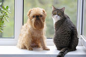 Cat and dog on the window — Stock Photo
