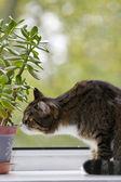 Katze sitzt auf dem fenster — Stockfoto