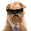 Dog with sunglasses and a tie — Stock Photo