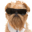 Dog with sunglasses — Stock Photo #33395367