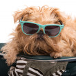 Dog traveler — Stock Photo