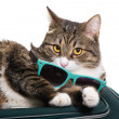 Cat traveler — Stock Photo