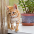 Stock Photo: Kitten stands on windowsill