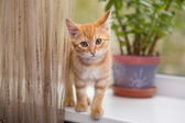 Kitten stands on the windowsill — Stock Photo