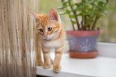 Kitten stands on the windowsill — Stock Photo