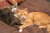 Friendship of the two cats — Stockfoto