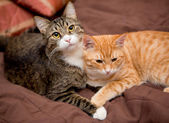 Friendship of the two cats — Stock Photo