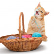 Orange tabby kitten — Stock Photo