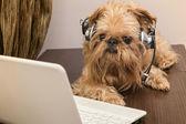 Pies w słuchawki z mikrofonem — Zdjęcie stockowe
