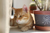 Red cat on the windowsill — Stock Photo