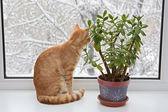 Orange cat sitting in the window — ストック写真