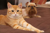 Dog and orange kitten  on the bed — Stock Photo