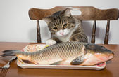 Cat and a big fish — Stock Photo